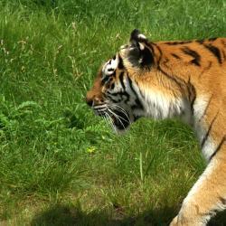 蒂尔堡野生动物园