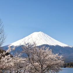 富士山, 富士河口湖