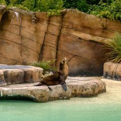 黑池动物园
