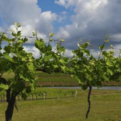 玛格丽特河葡萄酒产区