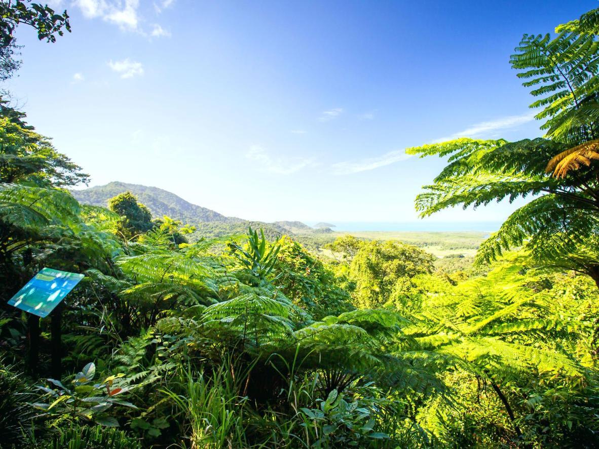 苦难角附近的戴恩树热带雨林已有1.35亿年历史