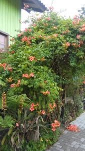拉斯蒂卡之家 - 豪斯佩迪尔亚度假屋外面的花园