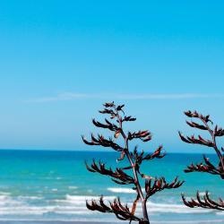 Snells Beach 9家酒店