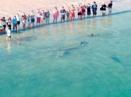 RAC芒基米亚海豚度假村
