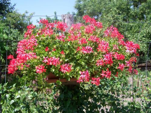 Név adó virágunk